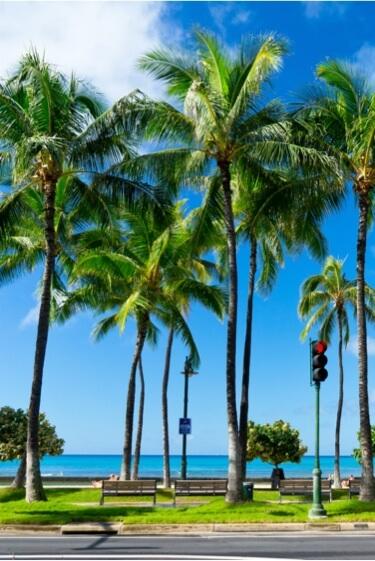 最新流行スポットから穴場のローカルエリアまでハワイ在住のプライベートガイドと特別な旅をしよう。